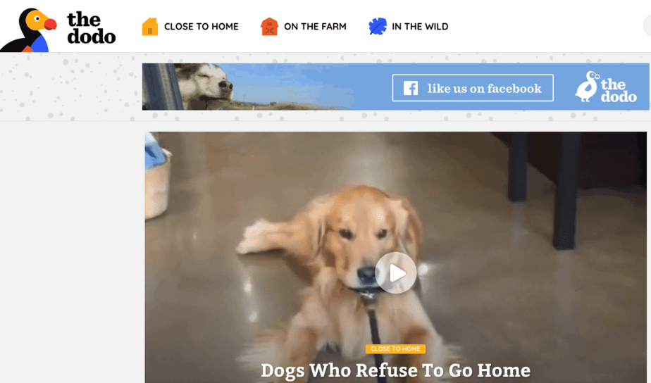 Some practical tips how to write an advertisement about the loss of a dog