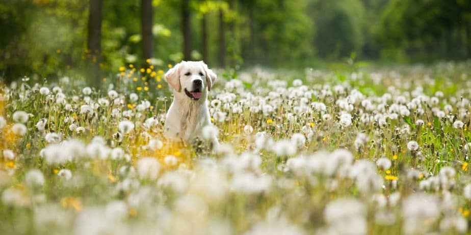 best cbd for dogs, dog in field