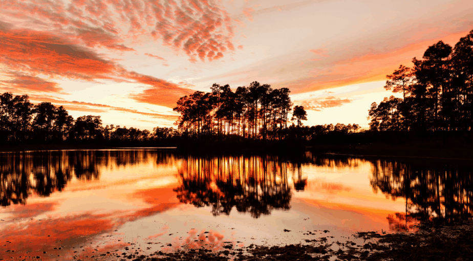 The Everglades | Florida
