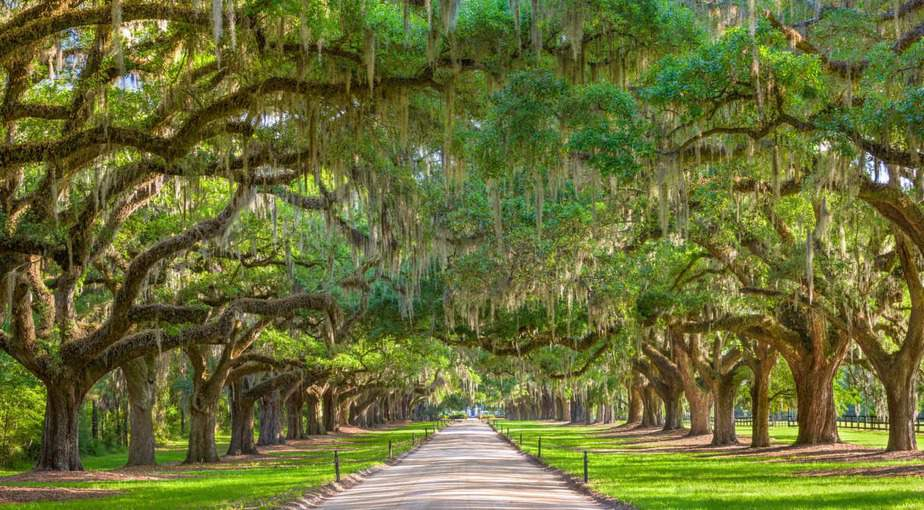 Charleston County Earth Day Festival