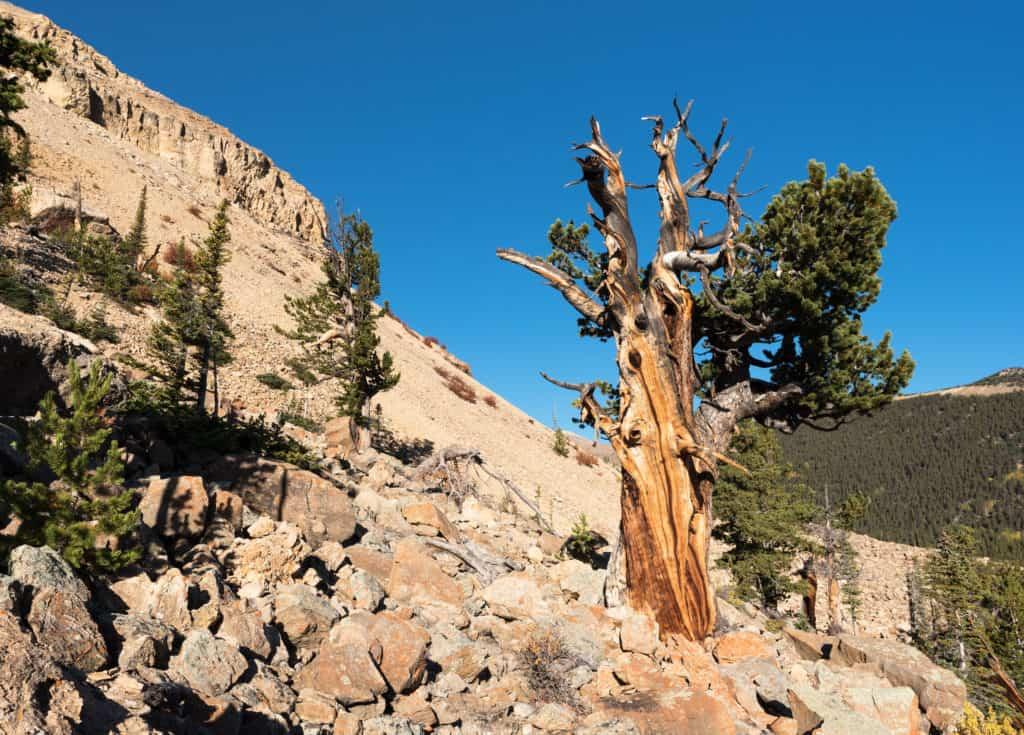 Limber Pine Trail, Estes Park, Colorado